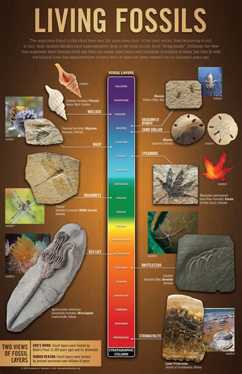 Living Fossils Wall Chart (PDF) | Answers in Genesis