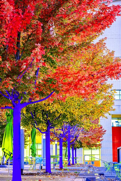 konstantin dimopoulos paints 'blue trees' to help cities